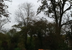 The Surrey Garden & Tree Company - Treework  in Byrford